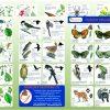 HabitatWooodlandFrontBack1500
